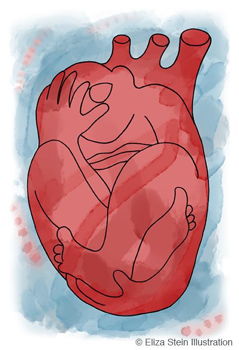 Human Heart Illustration by Eliza Stein