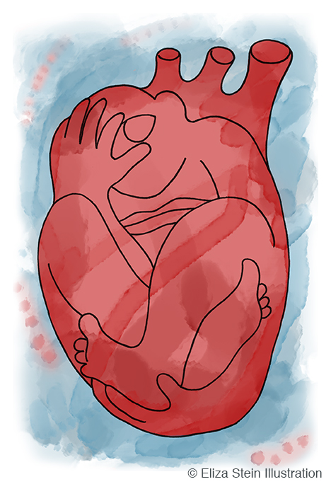 Human Heart Illustration by Eliza Stein